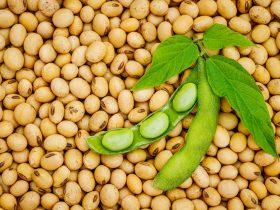 soya fasulyesi faydaları